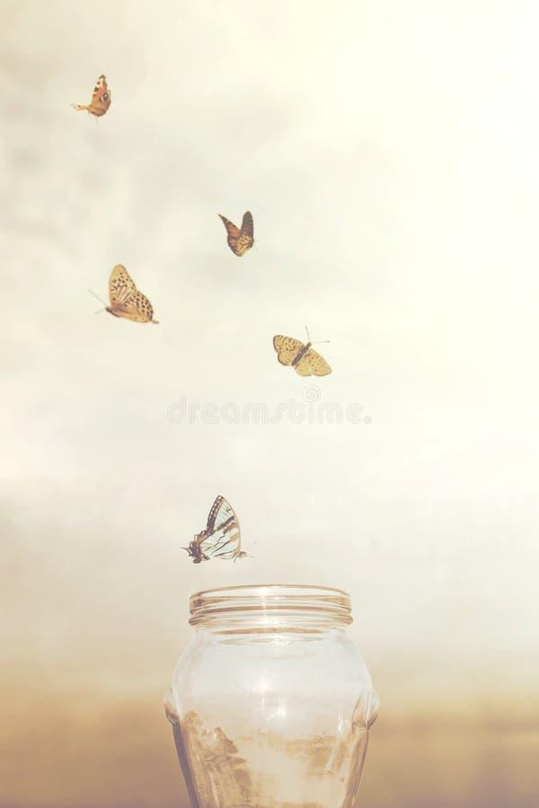 Freiheit und träumerische Konzepte für eine Gruppe Schmetterlinge in einem Vase stockbilder