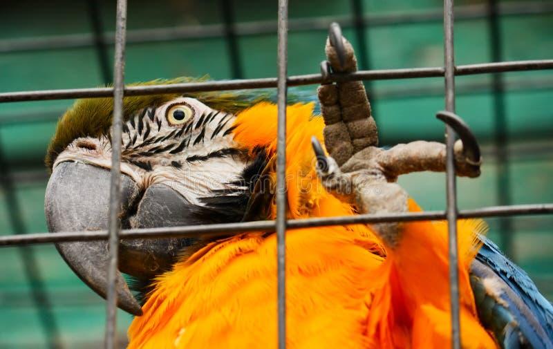 Freiheit zu den Papageien! lizenzfreies stockbild