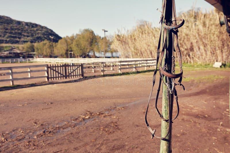 Frein en cuir de cheval photos stock