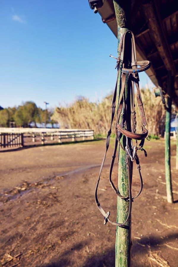 Frein en cuir de cheval photographie stock