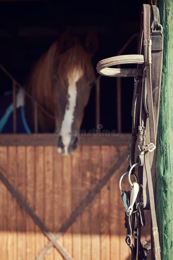 Frein en cuir de cheval photographie stock libre de droits