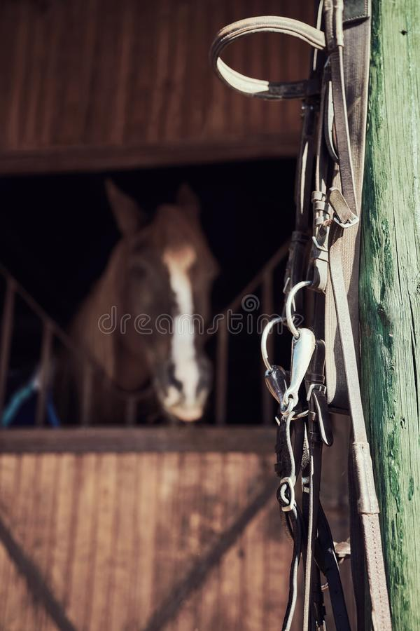 Frein en cuir de cheval photo stock