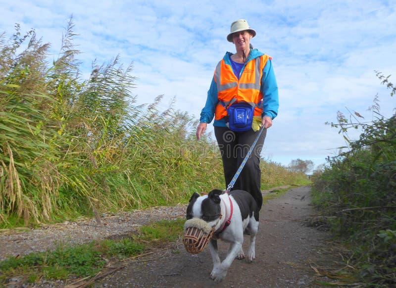 Freiwilliger Hundewanderer und Hund lizenzfreies stockbild
