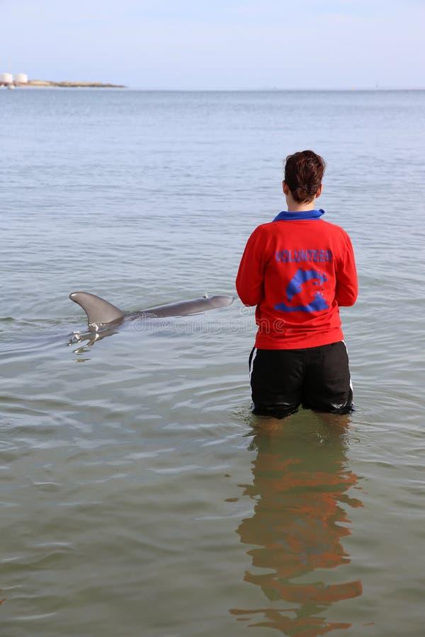 Freiwilliger mit Delphin lizenzfreie stockfotografie