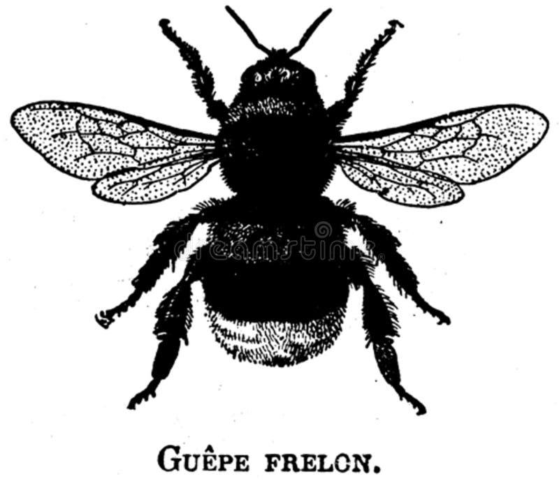 Frelon-oa Free Public Domain Cc0 Image