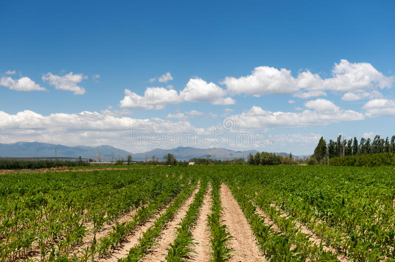 French agriculture landscape. With maize and mountains royalty free stock photography