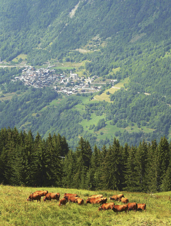 Download French Alpine Village stock photo. Image of aristocratic - 22591804