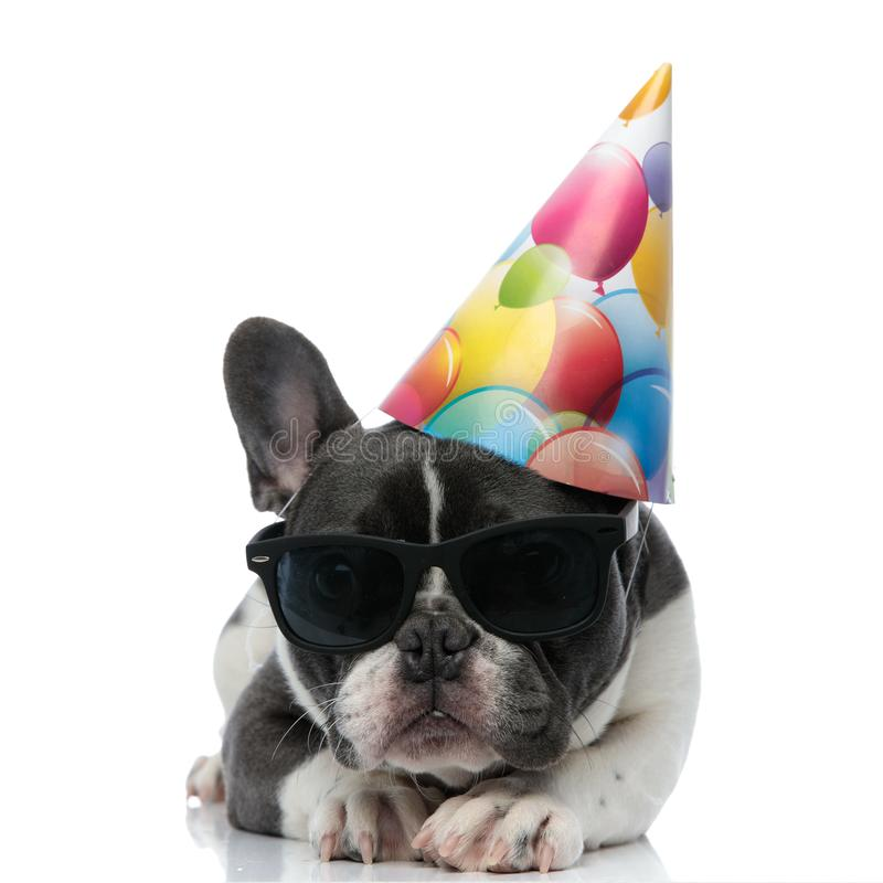 French bulldog with birthday party hat and black sunglasses. Resting on his paws stock images