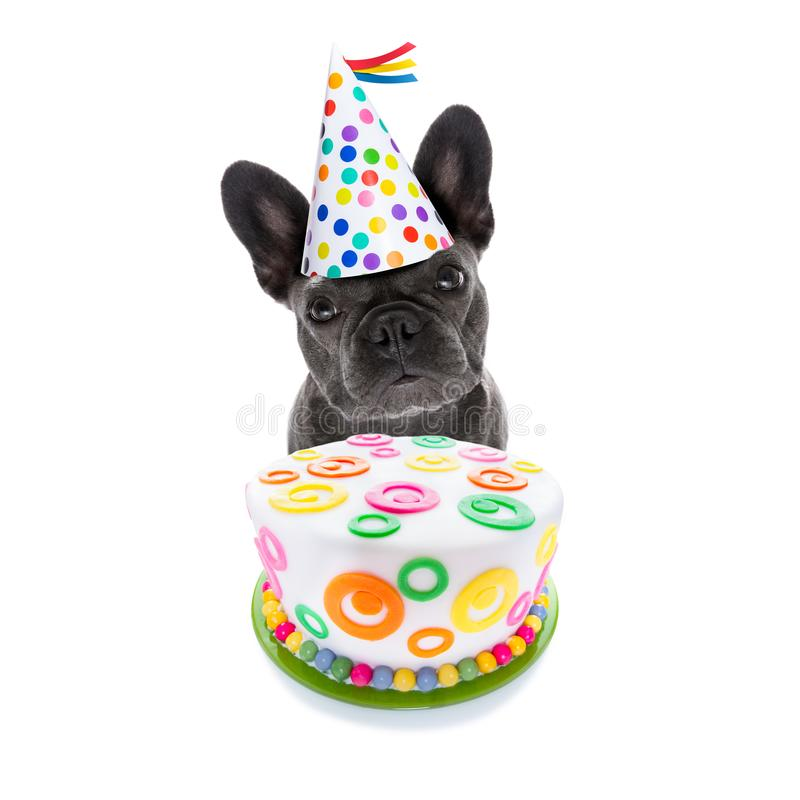Happy birthday dog and cake. French bulldog dog hungry for a happy birthday cake ,wearing party hat , isolated on white background stock photos