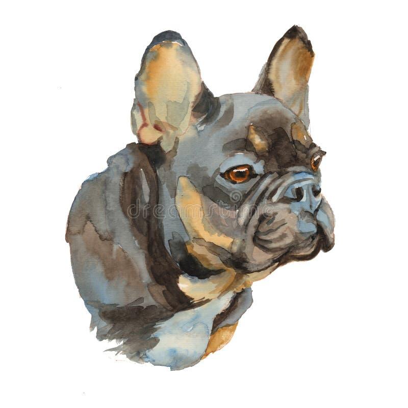 The French Bulldog portrait stock illustration
