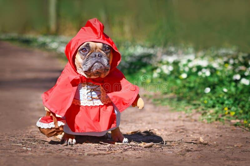 French Bulldog se viste como el personaje de cuento de hadas Little Red Riding Hood con disfraces de cuerpo entero con brazos fal imagenes de archivo