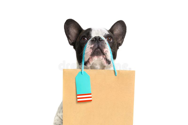 French bulldog with the shopping bag royalty free stock image