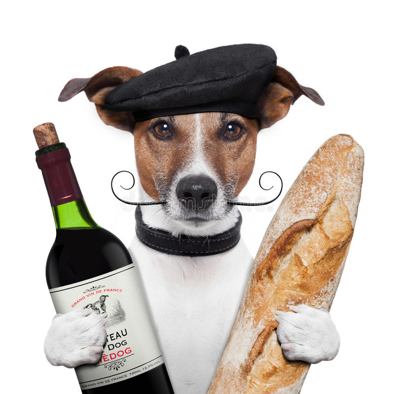 French dog wine baguete beret stock image
