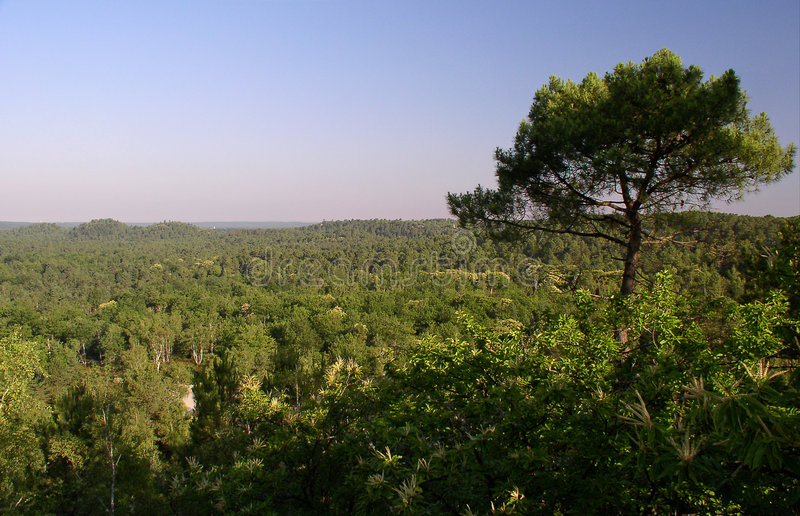 French forest landscape stock image
