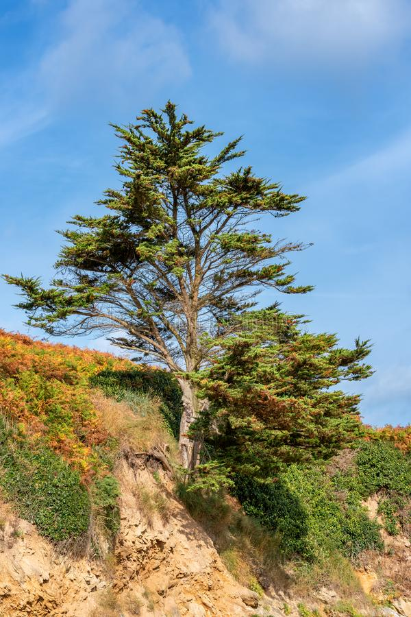 French landscape - Bretagne. Single tree stands on rocky ground royalty free stock photography