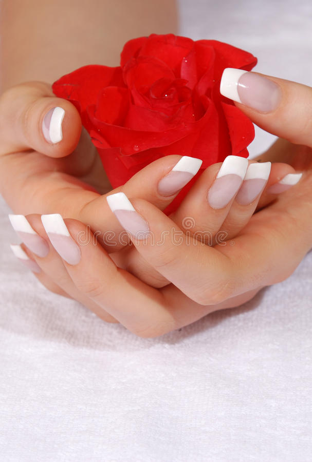 Free French Manicure And Scarlet Rose Stock Photography - 10759762