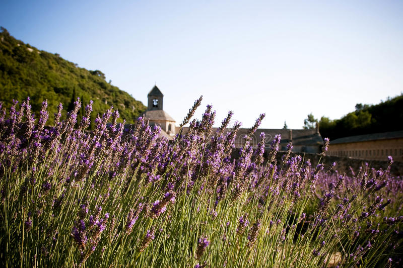 French Monastery And Fields Of Lavender Stock Photos