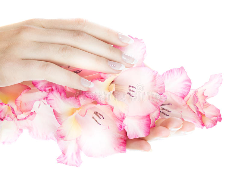 Download French nails stock image. Image of bright, closeup, gladiolus - 11321585