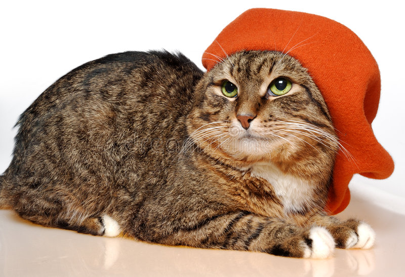 Download French painter cat stock photo. Image of lovely, feline - 491040