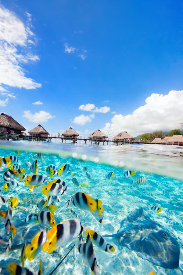 French Polynesia. Fish and rays swimming under over the water bungalows in French Polynesia royalty free stock photography