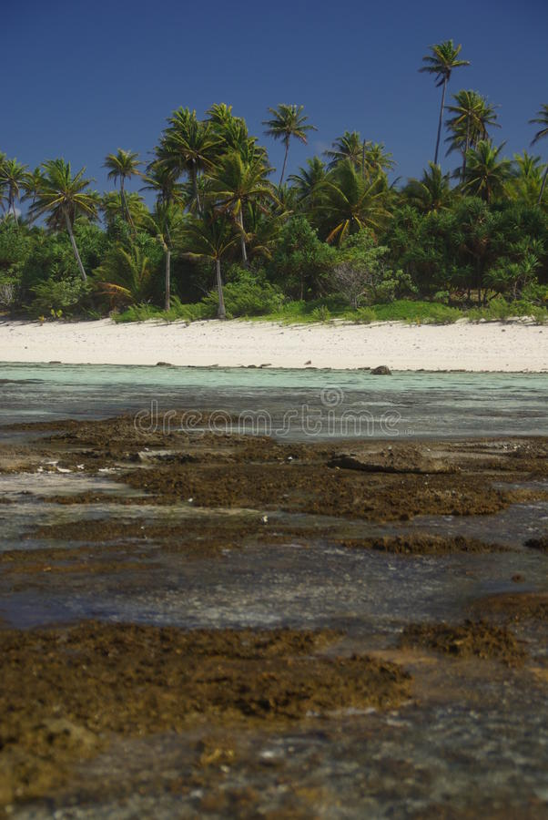 Download French Polynesia Beach. Royalty Free Stock Images - Image: 11546839