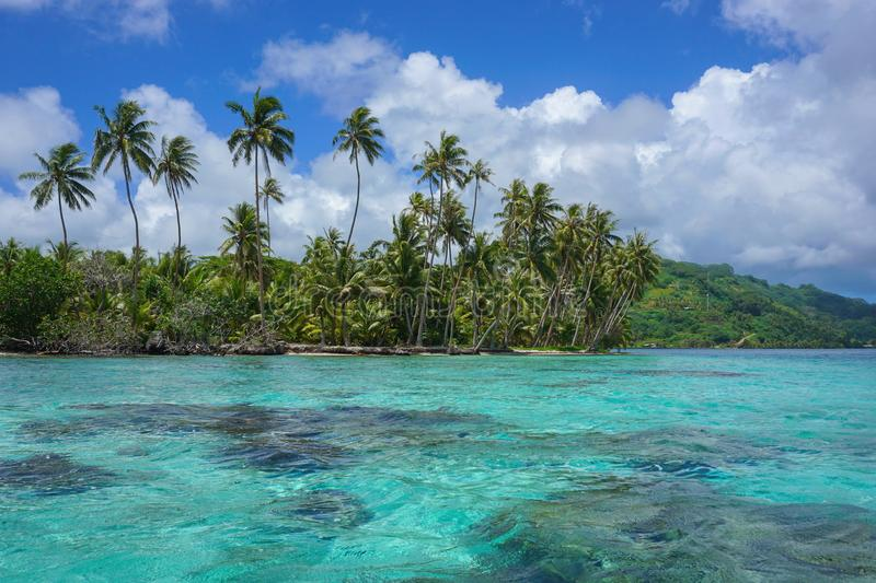 French Polynesia motu and lagoon Huahine island. French Polynesia coconut palm trees on the motu Vavaratea and turquoise water of the lagoon, Huahine island royalty free stock image