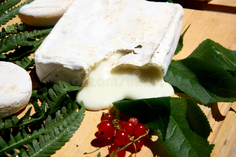 French soft cheese(fromage) and currants(groseilles) from Rhone-Alps region of France. Soft French cheeses (fromage) and groseilles (currants) arranged with royalty free stock photography