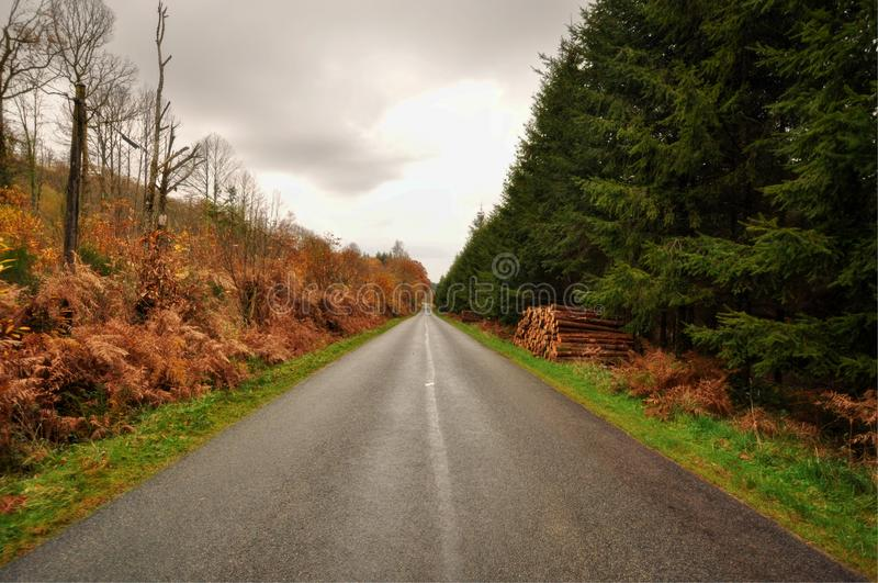 French straight road in the countryside during the Autumn with forest and woods on the sides.  royalty free stock photo