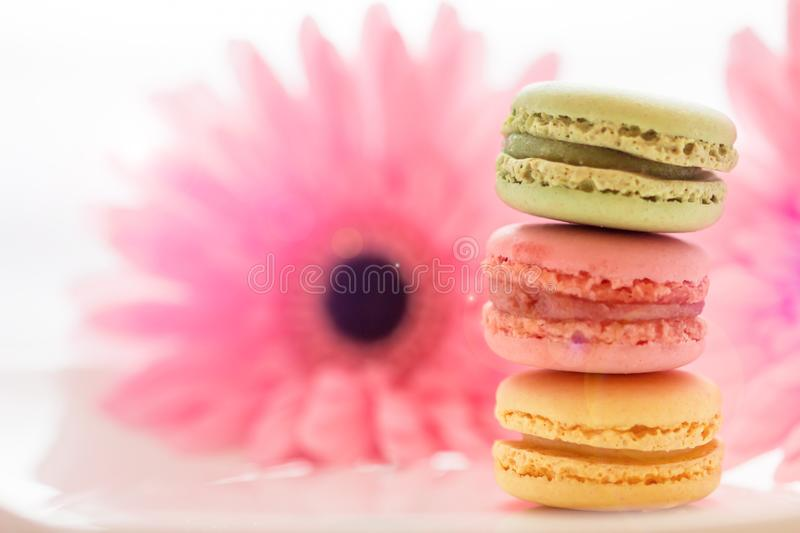 French sweet delicacy macaroons variety colorful and different types sweet macarons on white plate with blurred pink flower stock image