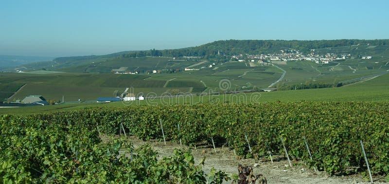 Download French vineyard stock photo. Image of vineyard, winery - 521116