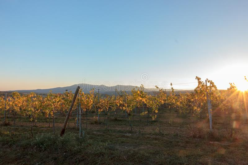 French vineyard at sunset in autumn royalty free stock photos