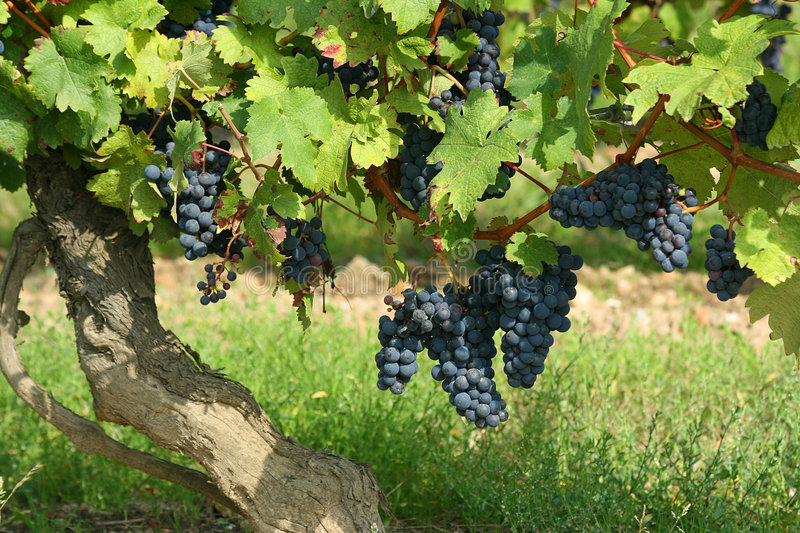 French Winery Royalty Free Stock Photo