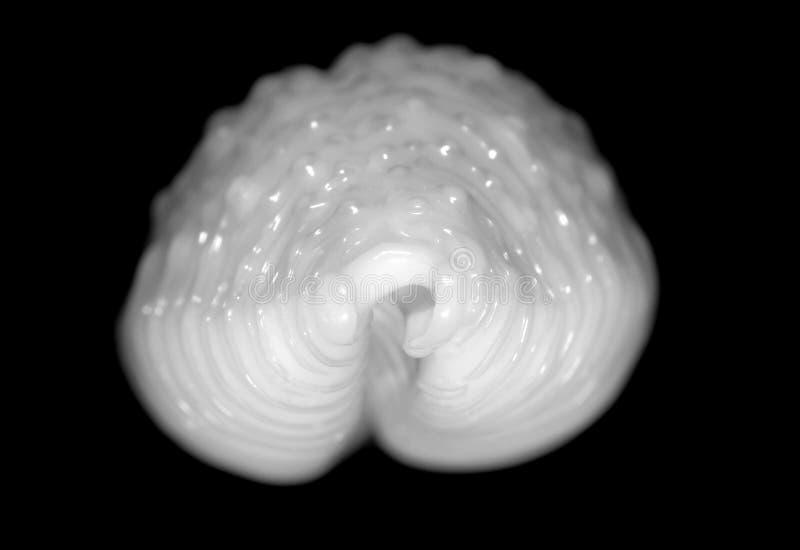 Frente de un shell arrugado del caracol en blanco y negro imagen de archivo libre de regalías