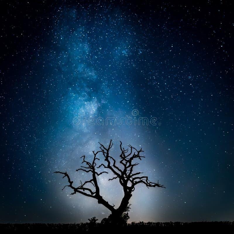 Frente hermoso del árbol de la vía láctea fotografía de archivo libre de regalías