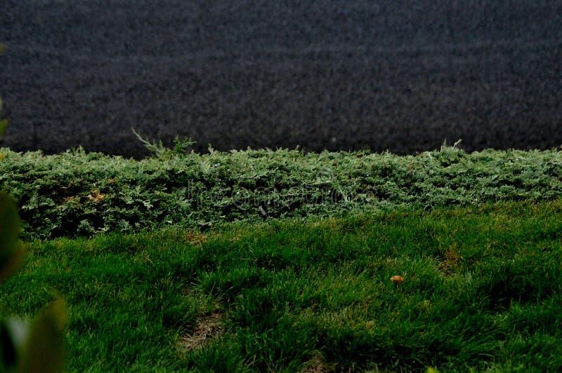 FRENTE A plantas GRANDES EN EL VALLE LEWISTIN IDAHO foto de archivo libre de regalías