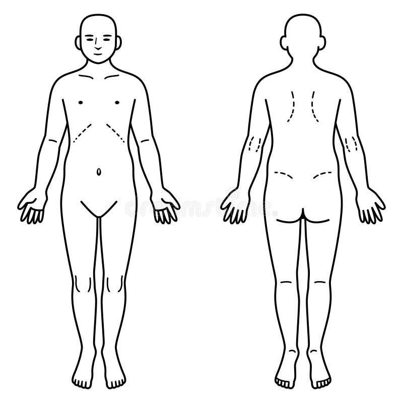 Frente Y Parte Posterior Del Cuerpo Humano Ilustración del Vector ...