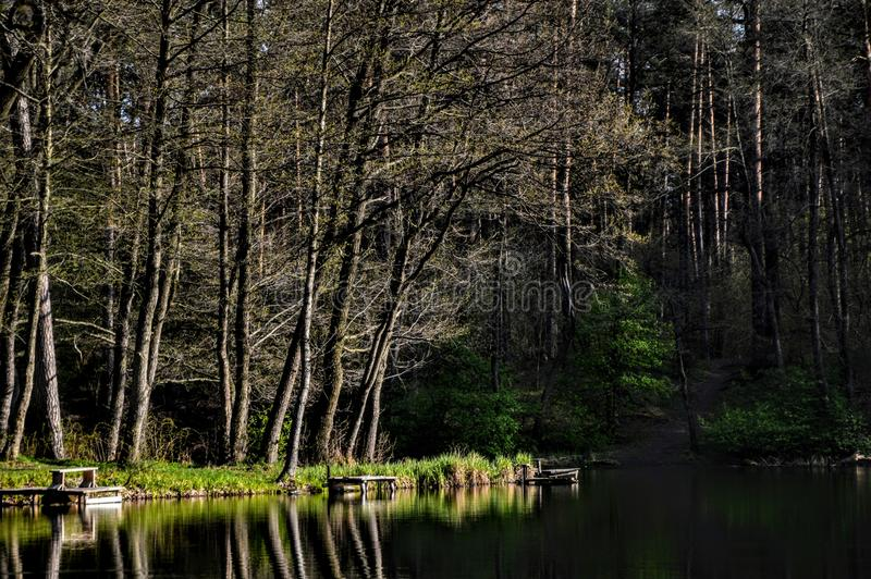 Frentes verdes e lago imagem de stock royalty free