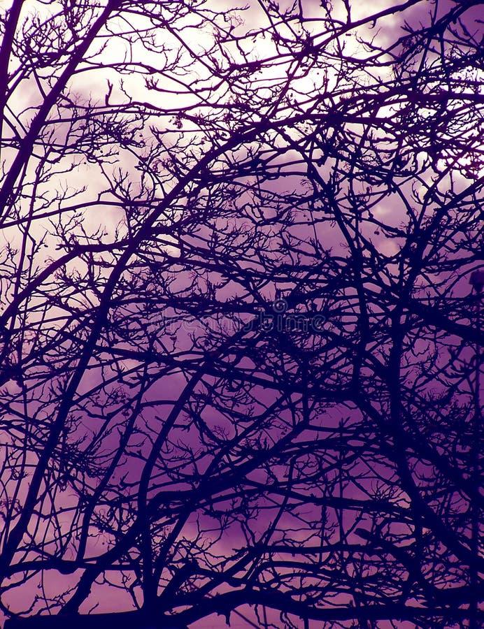 Frequentierte Bäume stockbilder