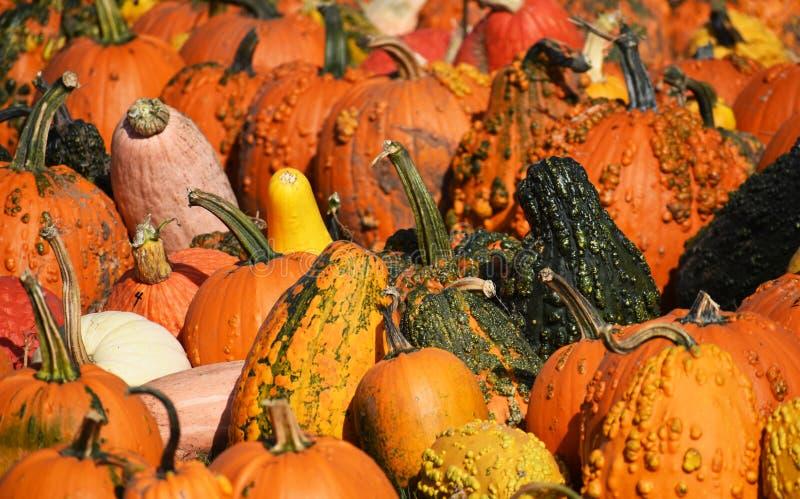 Frequentierter Halloween-Kürbis stockbilder
