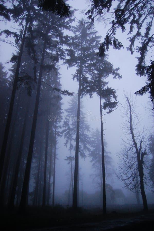 Frequentierter Wald stockbild