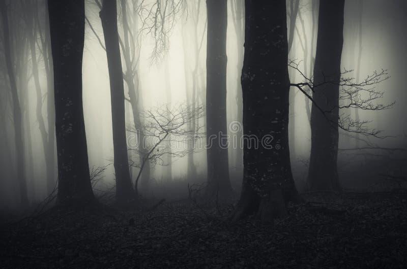 Frequentierter Wald mit mysteriösem Nebel und gespenstischen Bäumen lizenzfreies stockfoto