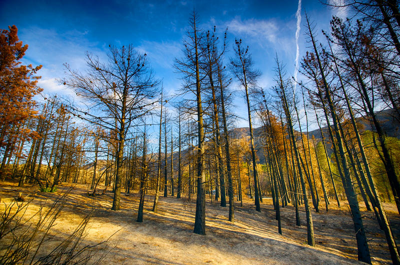 Frequentierter Wald nach verheerendem Feuer stockbild