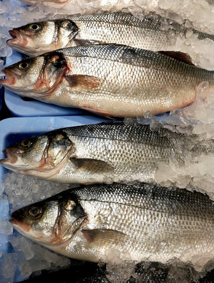Fres ryba przy oceną obraz royalty free