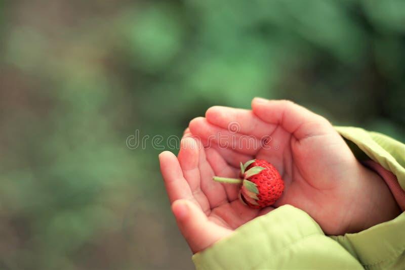 Fresa en palmas del ` s de los niños imagenes de archivo
