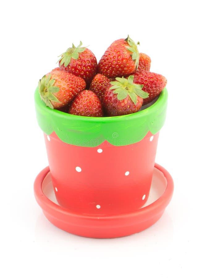 Fresa fresca en pote en el fondo blanco imagen de archivo libre de regalías