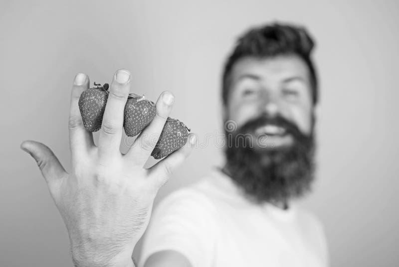 Fresa llena con los antioxidantes de la fibra de la vitamina C Sirva las fresas del inconformista de la barba entre el fondo del  imagen de archivo