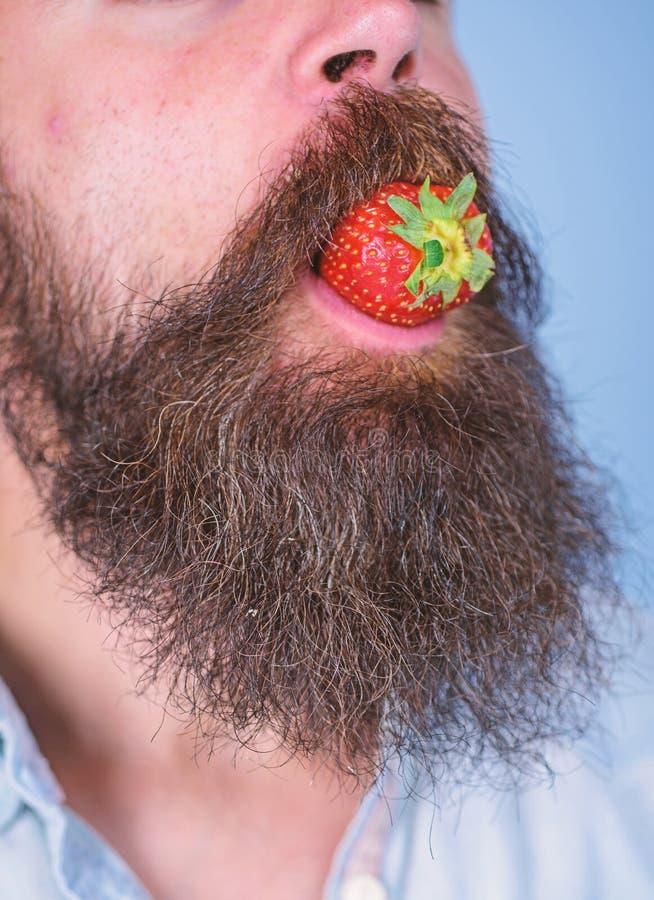 Fresa masculina del intento de la barba de la cara Bigote rodeado boca masculina de la barba de la baya Placer gastronómico El ho imagen de archivo libre de regalías