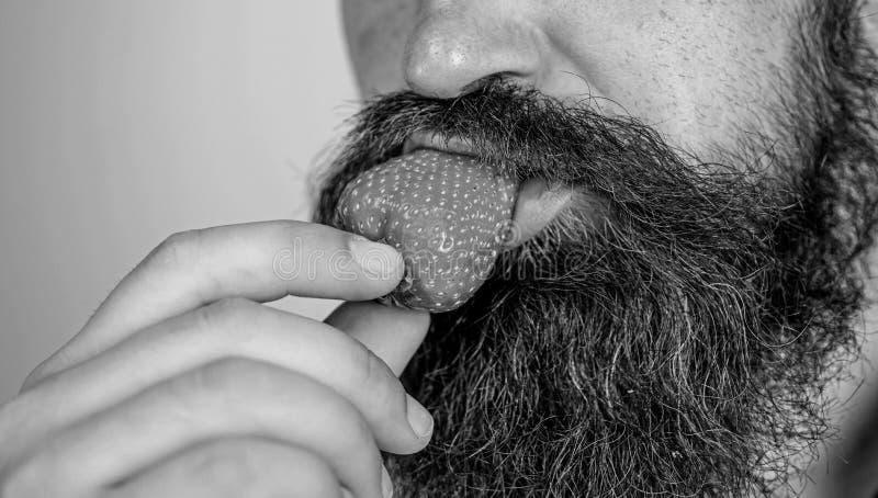 Fresa masculina del intento de la barba de la cara Placer gastronómico Concepto del deseo Placer oral Goce de la fresa roja madur fotografía de archivo libre de regalías