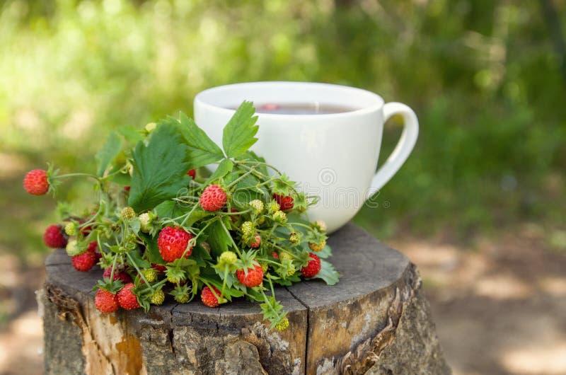 Fresa salvaje madura del bosque y taza blanca de té en el tocón en el bosque, concepto del tiempo de verano fotografía de archivo libre de regalías