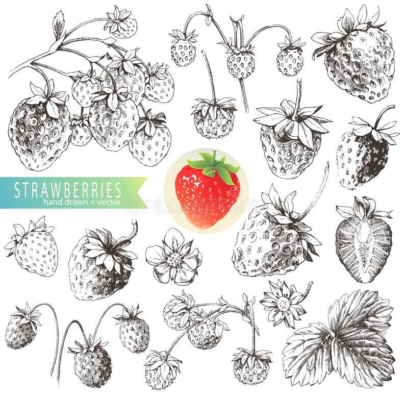Fresas stock de ilustración